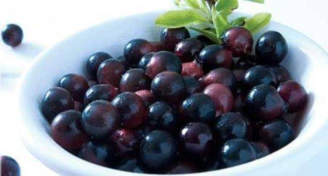 Manfaat Acai Berry Bagi Tubuh Manusia