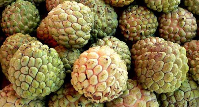 manfaat-buah-srikaya