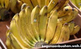 kegunaan pisang raja