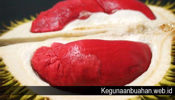 Manfaat Durian Merah Sebagai Buah Nikmat Pencegah Segala Penyakit