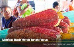 Manfaat Buah Merah Tanah Papua