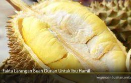Fakta Larangan Buah Durian Untuk Ibu Hamil