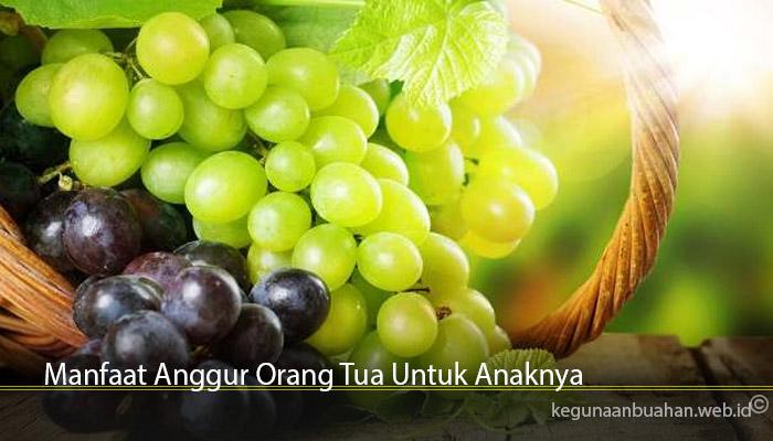 Manfaat Anggur Orang Tua Untuk Anaknya